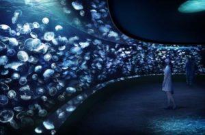 サンシャイン水族館も新展示「海月空感(くらげくうかん)」の画像です。サンシャイン水族館公式サイトから引用しました。